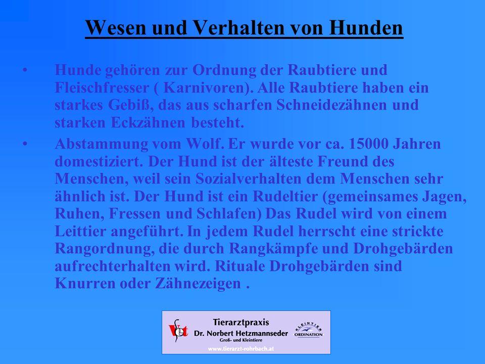 www.tierarzt-rohrbach.at Wesen und Verhalten von Hunden Hunde gehören zur Ordnung der Raubtiere und Fleischfresser ( Karnivoren).
