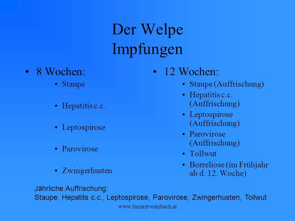 Der Welpe Impfungen 8 Wochen: Staupe Hepatitis c.c.