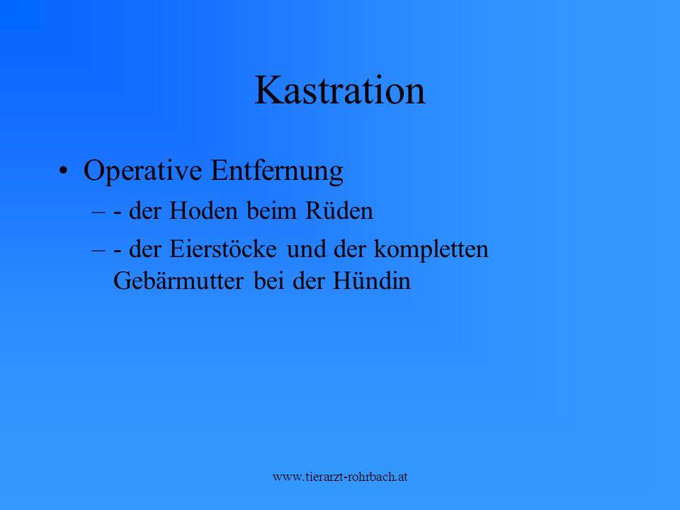 Kastration Operative Entfernung –- der Hoden beim Rüden –- der Eierstöcke und der kompletten Gebärmutter bei der Hündin
