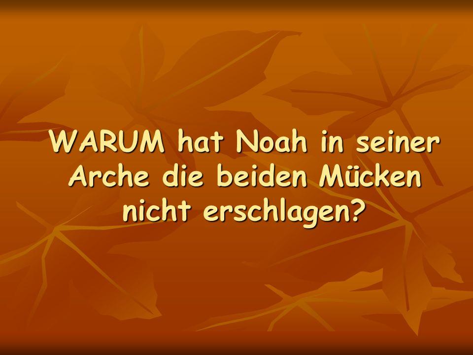 WARUM hat Noah in seiner Arche die beiden Mücken nicht erschlagen