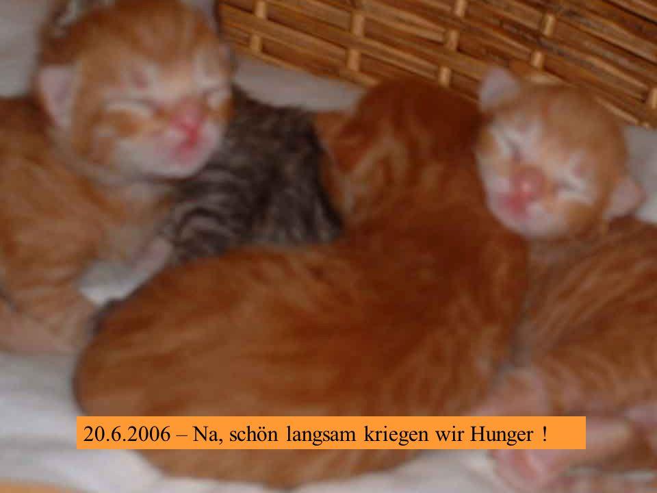 20.6.2006 – Wir können auch ohne Mami gut schlafen. Ätsch!