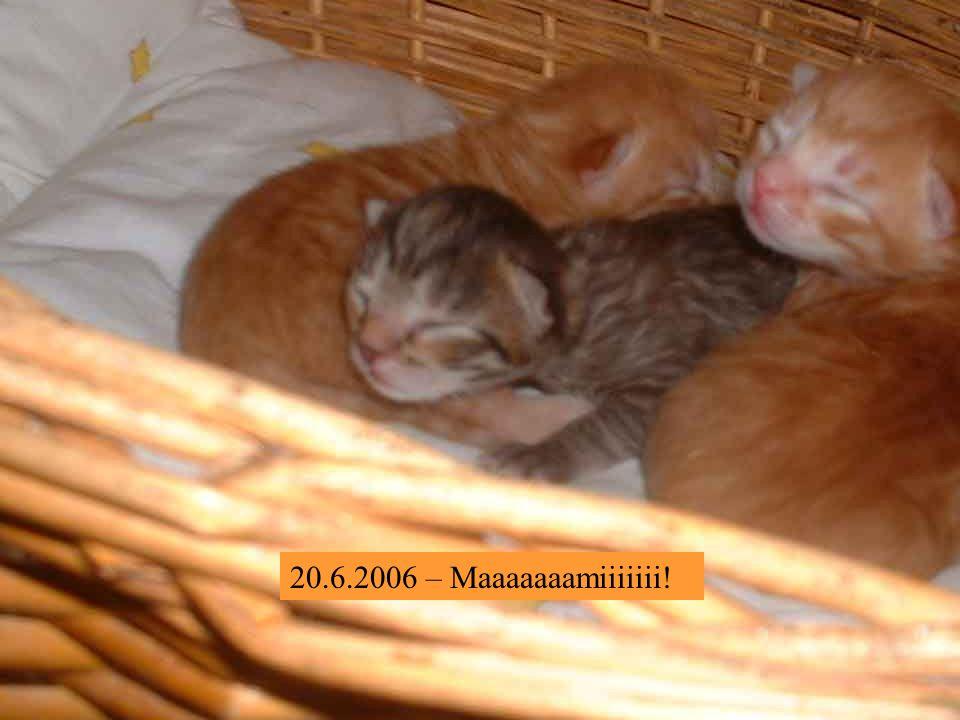 20.6.2006 – Na, schön langsam kriegen wir Hunger !