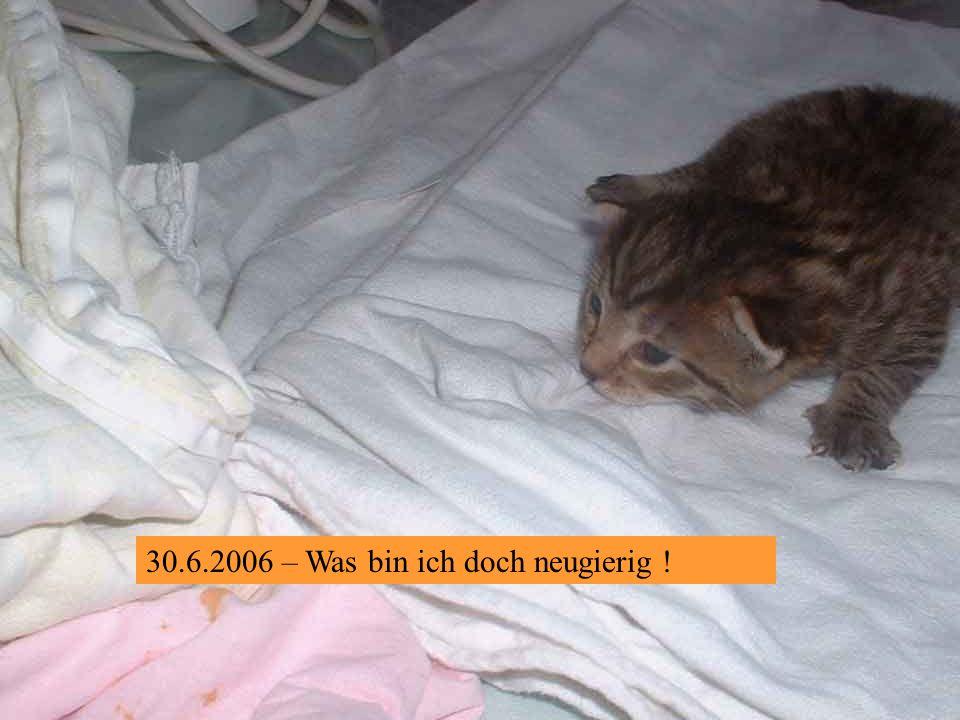 30.6.2006 – Augen auf, Brüder !