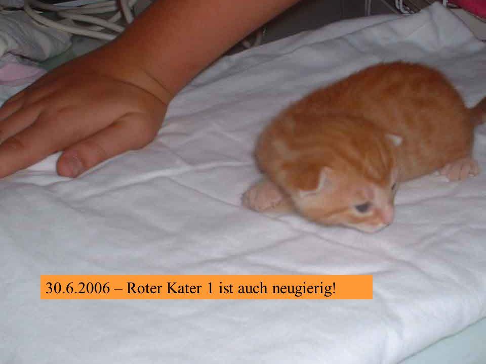 30.6.2006 – Was bin ich doch neugierig !