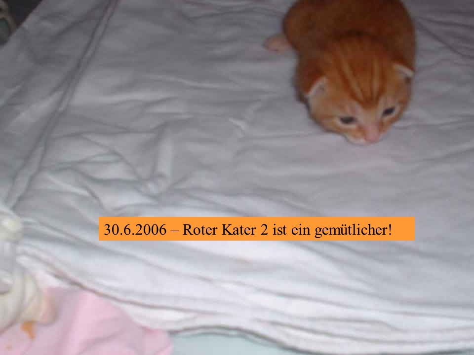 – Roter Kater 1 ist auch neugierig!