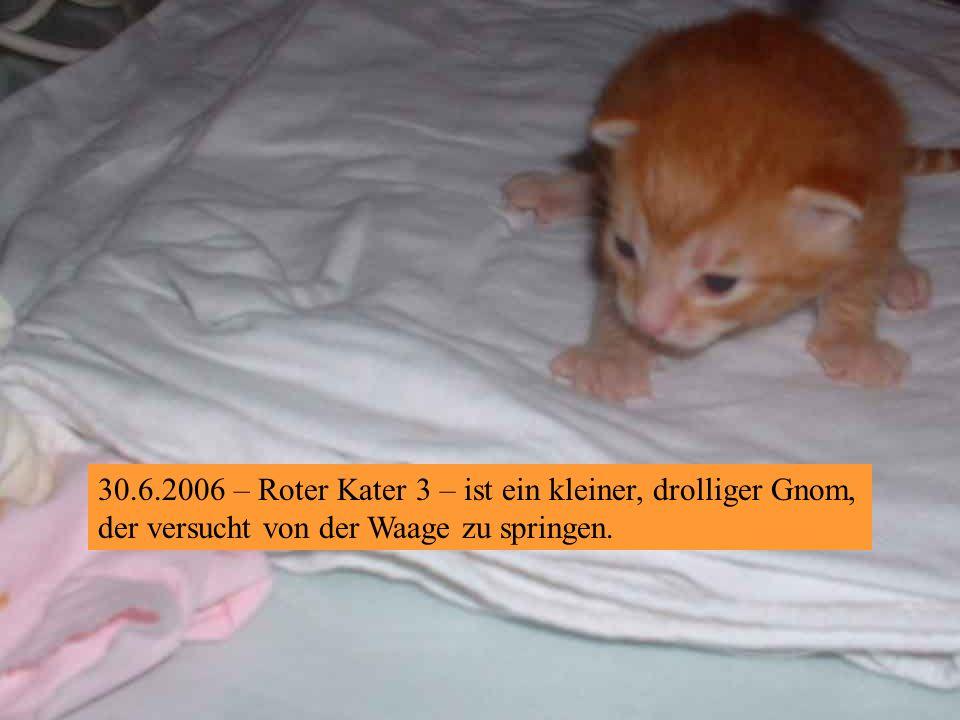 30.6.2006 – Roter Kater 2 ist ein gemütlicher!