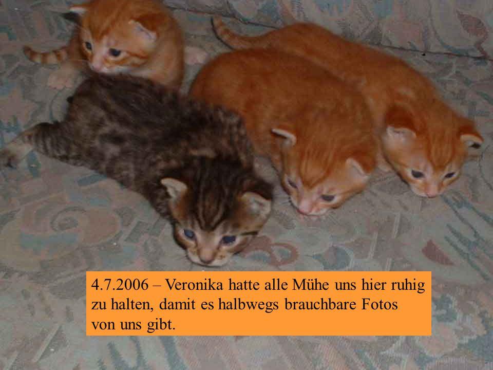 4.7.2006 – Wir sind schon ein recht ansehnliches Brüder-Quartett!