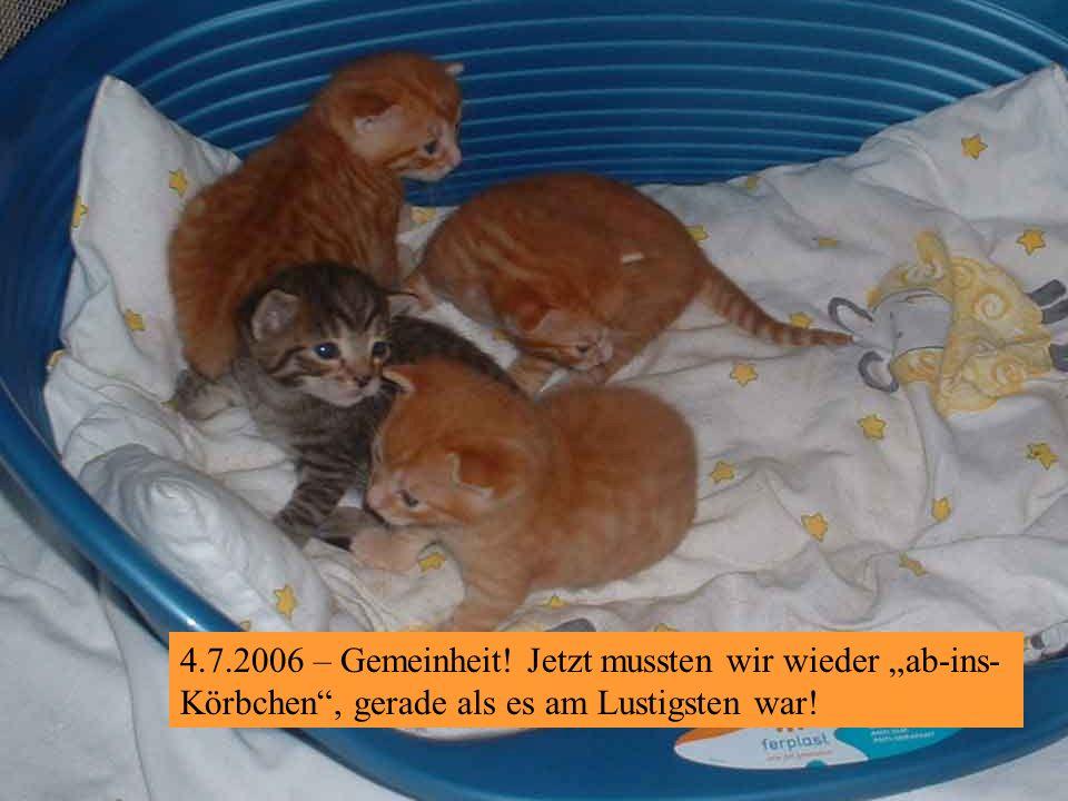 4.7.2006 – Herrli ist am Goderlkratzen. Fein! Und wir wissen, wir kommen alle an die Reihe.