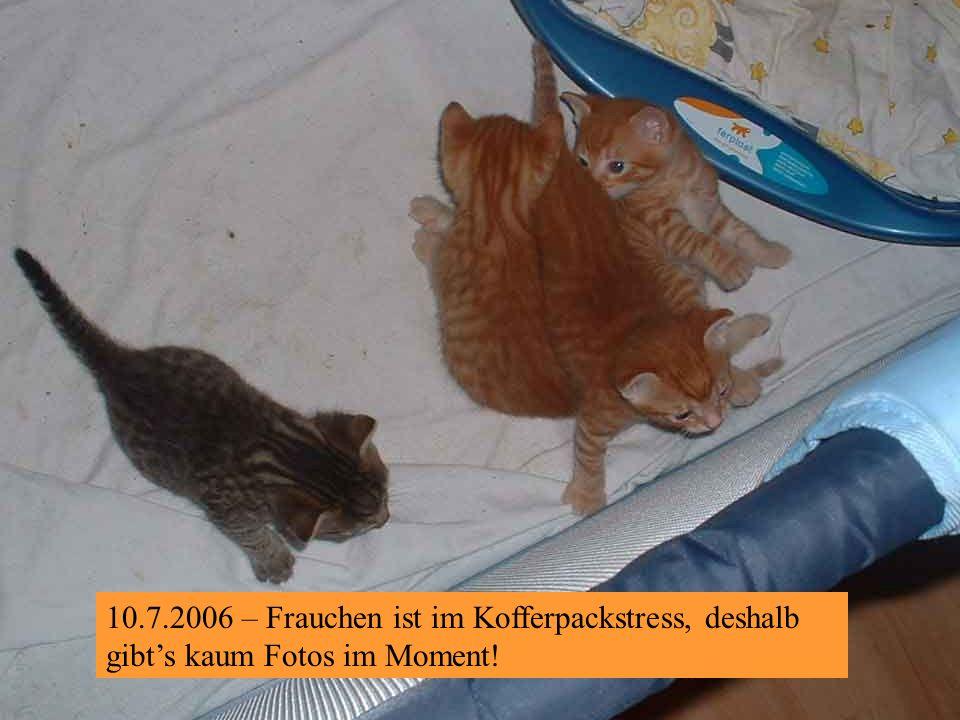 4.7.2006 – Gemeinheit! Jetzt mussten wir wieder ab-ins- Körbchen, gerade als es am Lustigsten war!