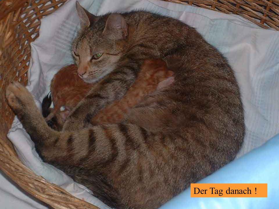 23.8.2006 – Zwei Brüder beim fröhlichen Spiel !