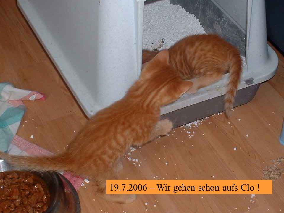 19.7.2006 – Da muss ich mir doch glatt dieses grausliche Futter von den Pfoten lecken.