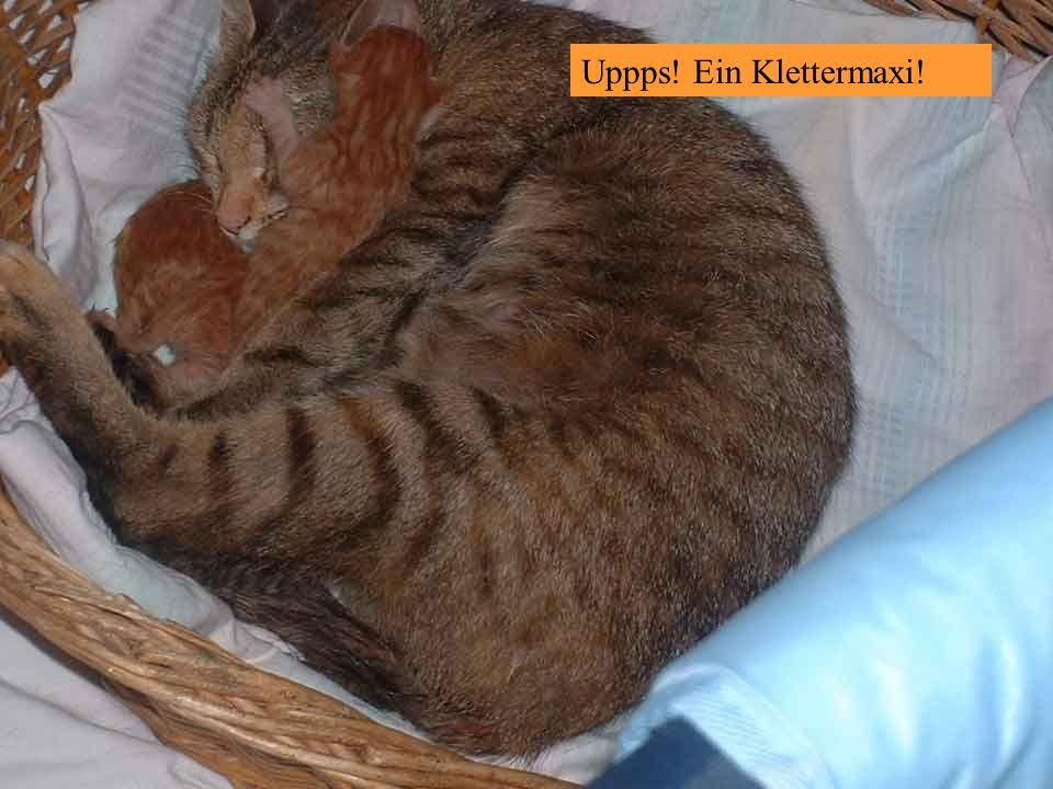 23.8.2006 – Sebastian wird heute abgeholt !