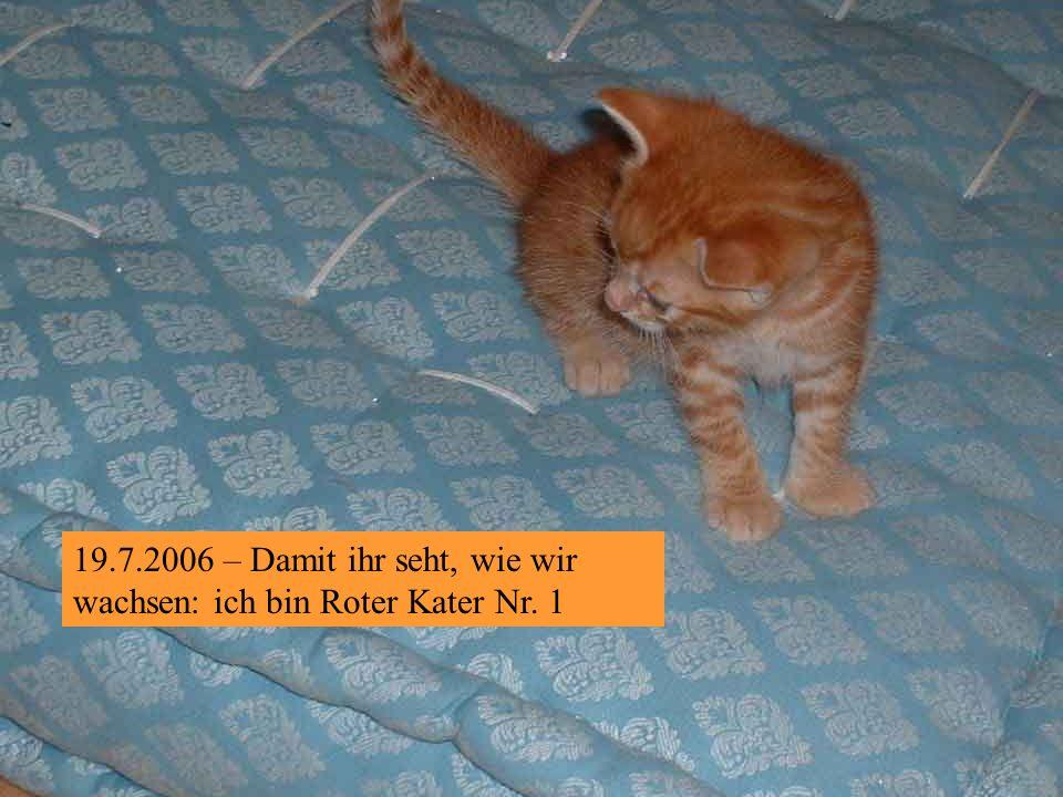 19.7.2006 – Auf der Pirsch !