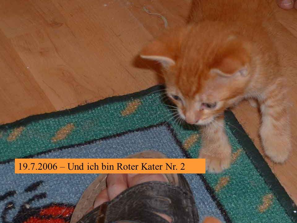19.7.2006 – Damit ihr seht, wie wir wachsen: ich bin Roter Kater Nr. 1
