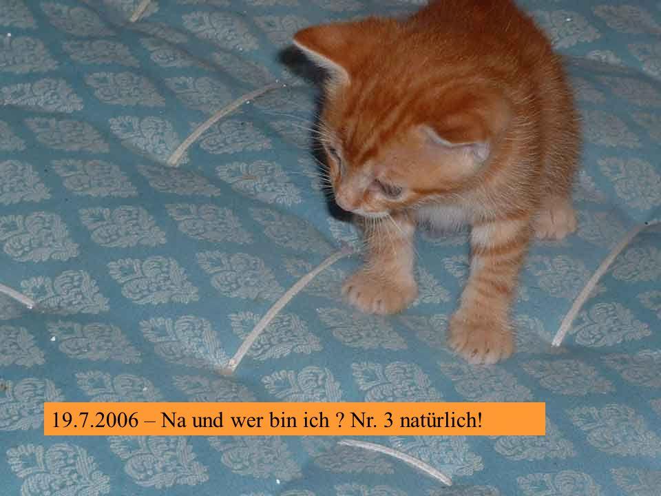 19.7.2006 – Und ich bin Roter Kater Nr. 2