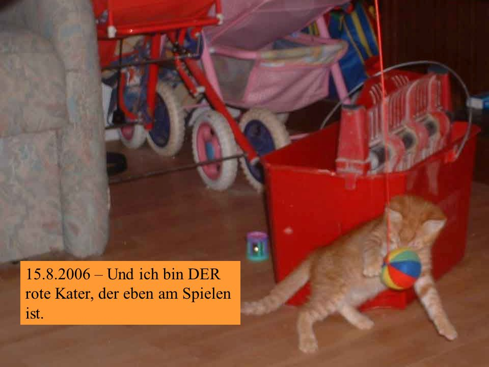 15.8.2006 – Na ich bin Roter Kater Nr.was-weiß-ich
