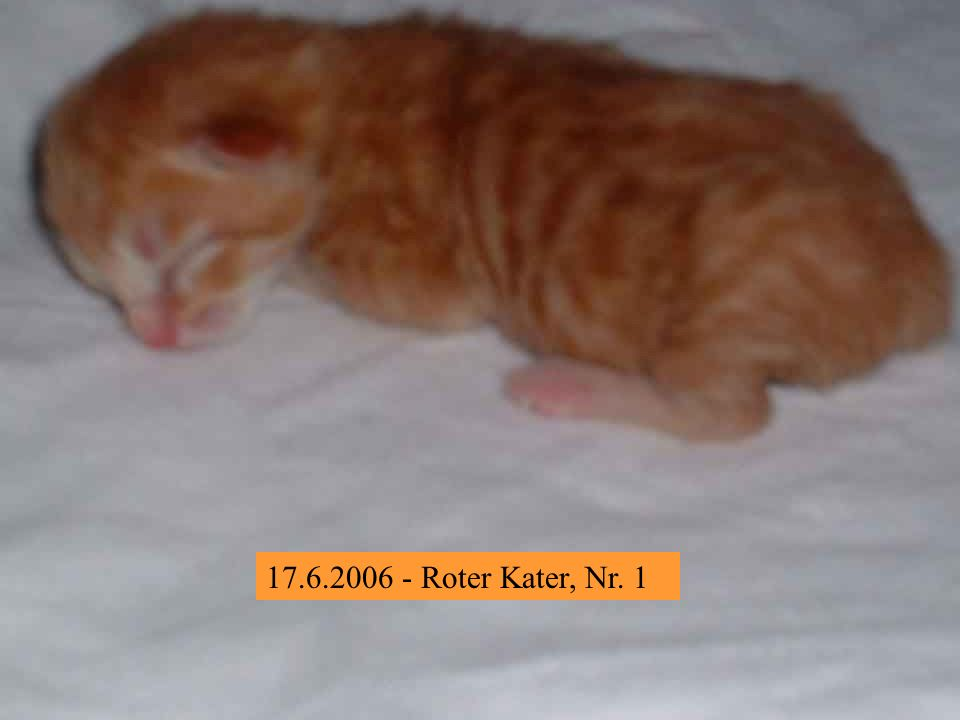 17.6.2006 - Roter Kater, Nr. 1