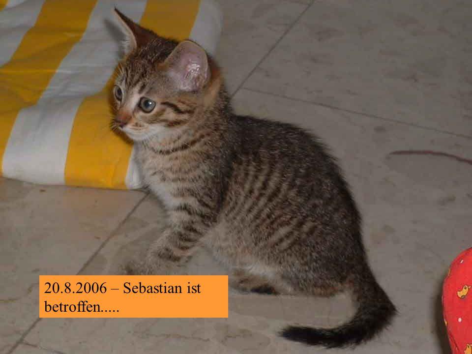 15.8.2006 – Somit bin ich der ganz, ganz andere rote Kater !
