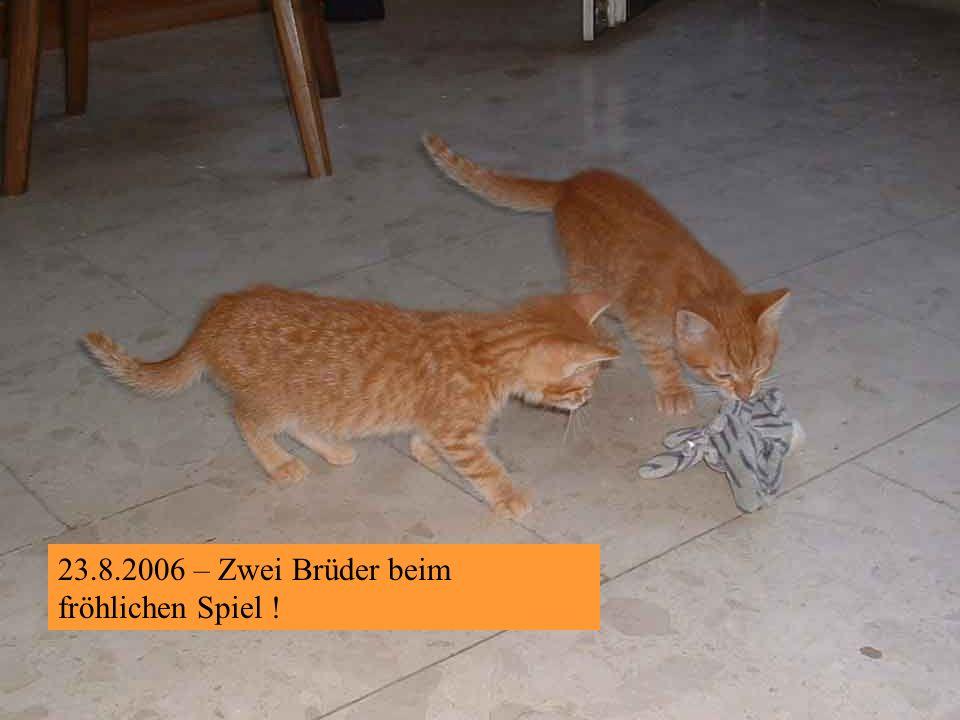 20.8.2006 -....denn Veronika nimmt Abschied von IHREM Meister Propper, der dann in weiterer Folge Toby genannt wurde.