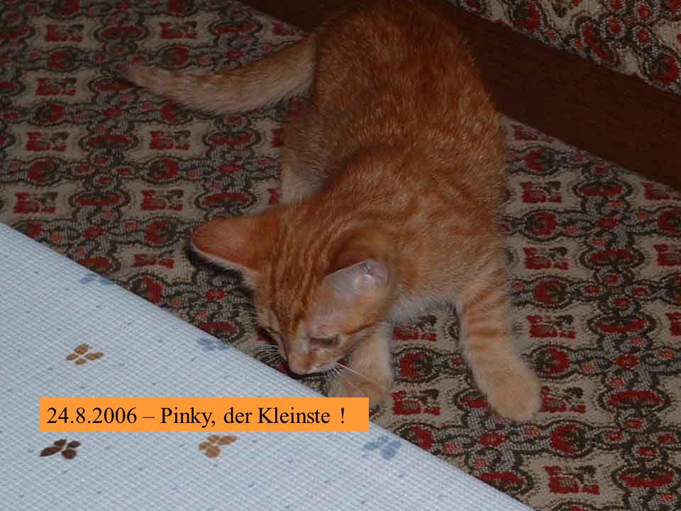24.8.2006 - Gnomi