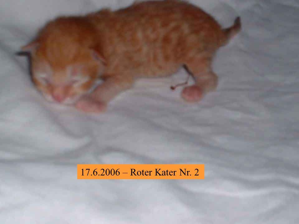 30.6.2006 – Roter Kater 3 – ist ein kleiner, drolliger Gnom, der versucht von der Waage zu springen.