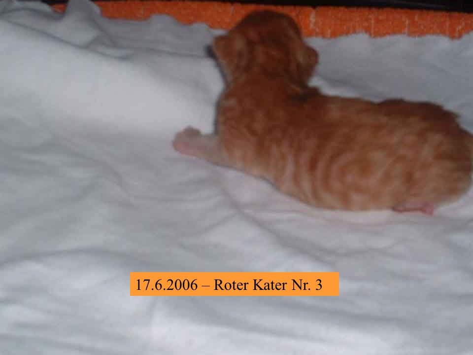 13.7.2006 – Ich, Sebastian, bin wohl der Erstgeborene, der erste, der einen Namen bekam, aber der letzte, der festes Futter zu sich nahm.