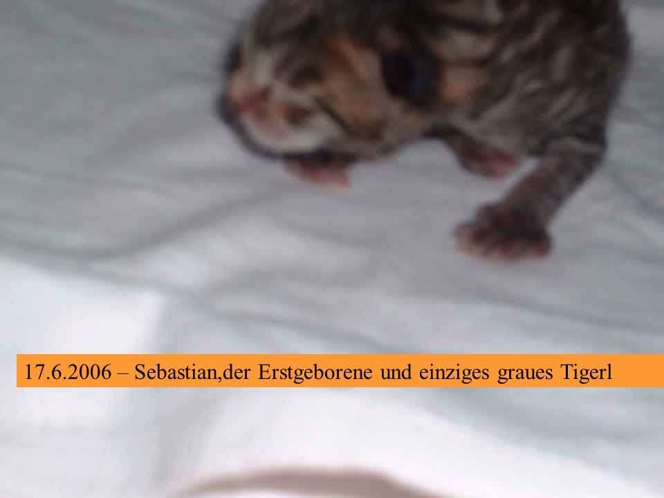 – Roter Kater Nr. 3