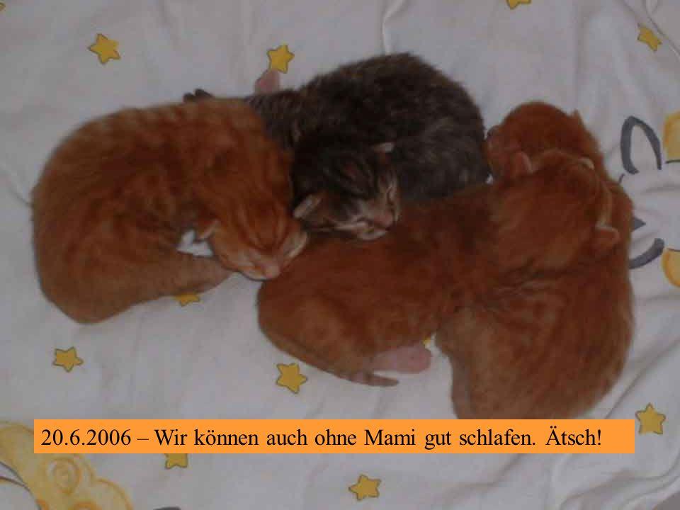 15.8.2006 – Und ich bin DER rote Kater, der eben am Spielen ist.