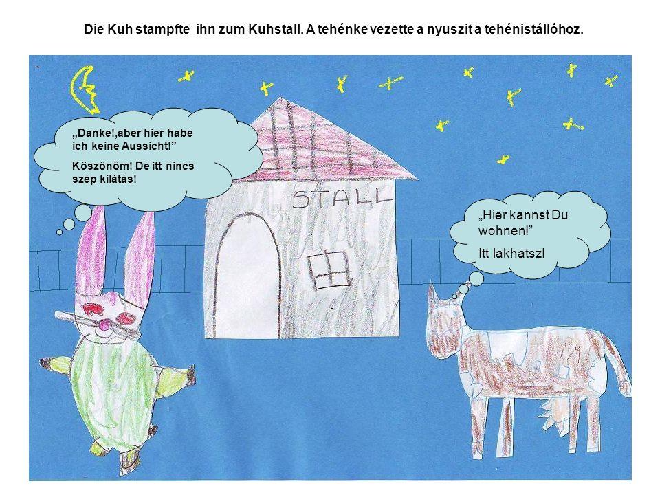 Die Kuh stampfte ihn zum Kuhstall. A tehénke vezette a nyuszit a tehénistállóhoz. Hier kannst Du wohnen! Itt lakhatsz! Danke!,aber hier habe ich keine