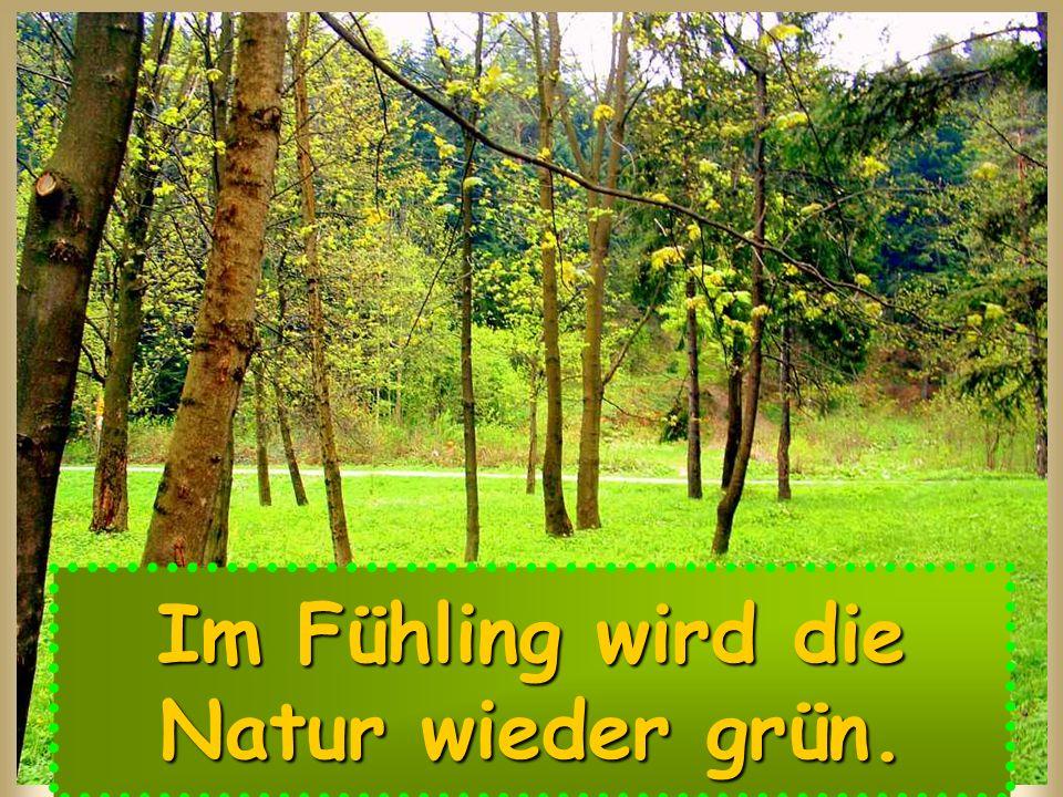 Im Fühling wird die Natur wieder grün.