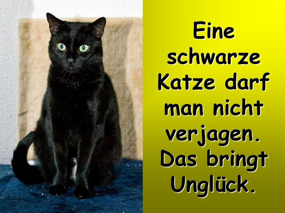 Eine schwarze Katze darf man nicht verjagen. Das bringt Unglück.
