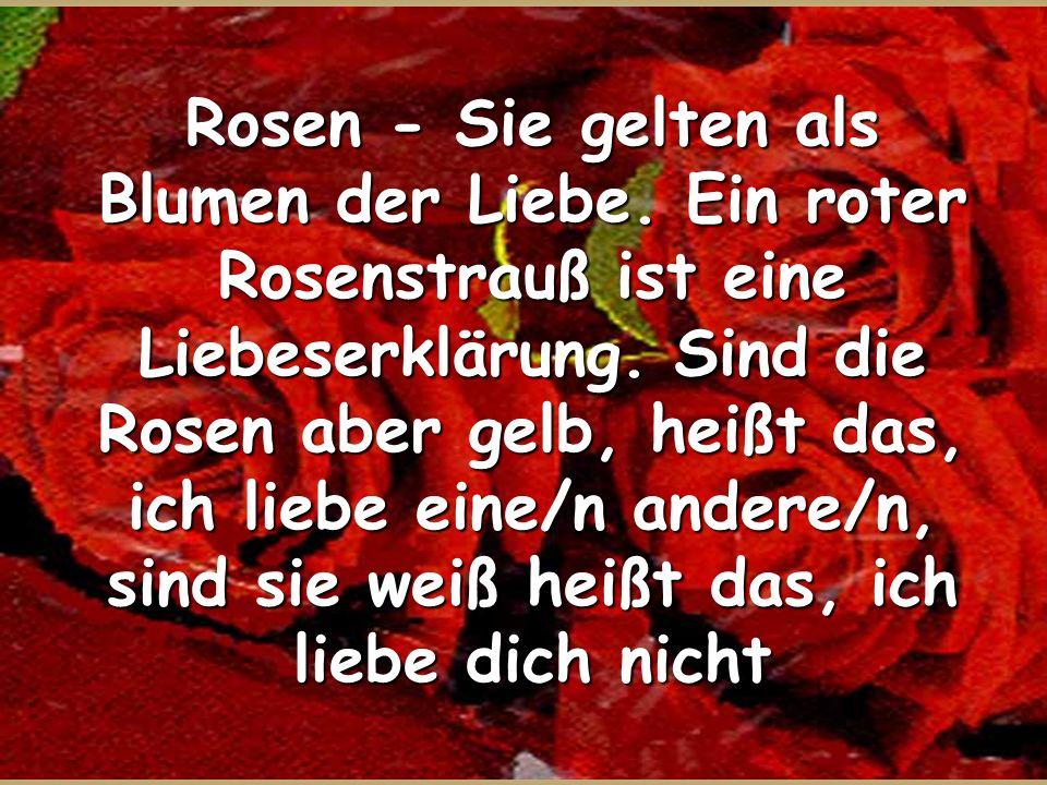 Rosen - Sie gelten als Blumen der Liebe. Ein roter Rosenstrauß ist eine Liebeserklärung. Sind die Rosen aber gelb, heißt das, ich liebe eine/n andere/