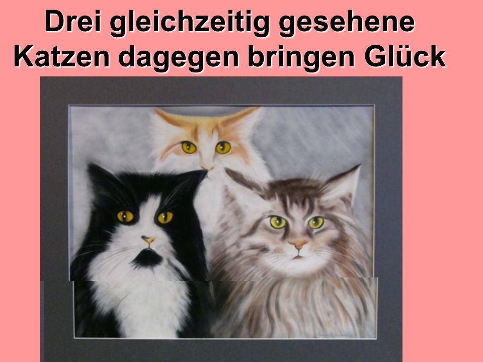 Drei gleichzeitig gesehene Katzen dagegen bringen Glück