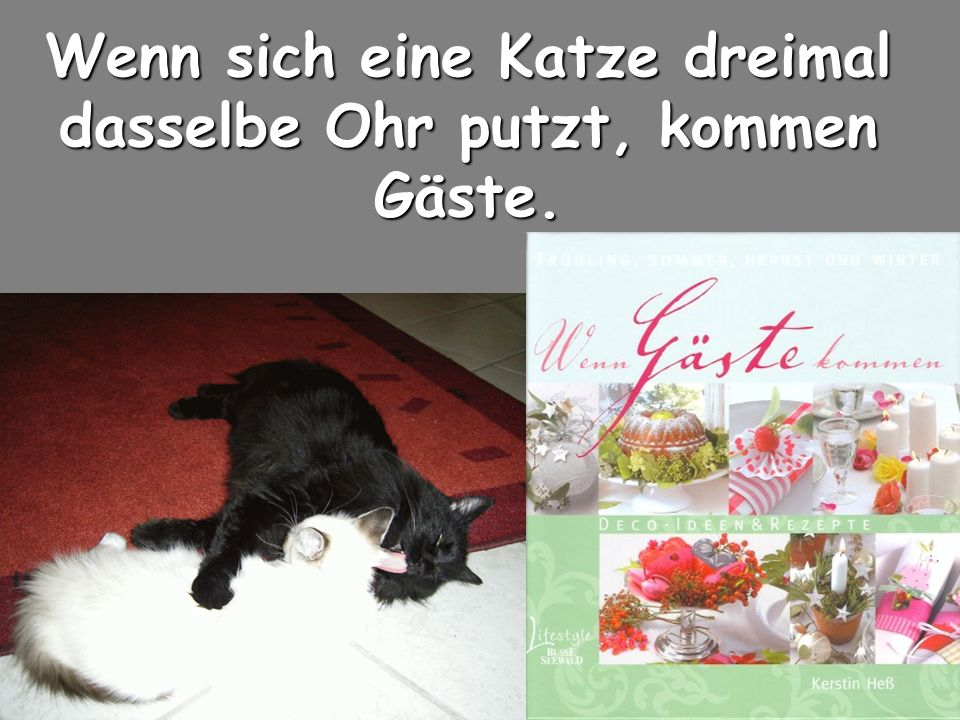 Wenn sich eine Katze dreimal dasselbe Ohr putzt, kommen Gäste. Wenn sich eine Katze dreimal dasselbe Ohr putzt, kommen Gäste.