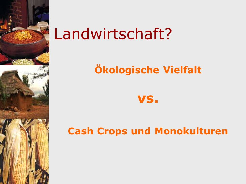 Landwirtschaft? Ökologische Vielfalt vs. Cash Crops und Monokulturen