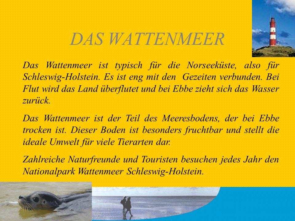 DAS WATTENMEER Das Wattenmeer ist typisch für die Norseeküste, also für Schleswig-Holstein. Es ist eng mit den Gezeiten verbunden. Bei Flut wird das L