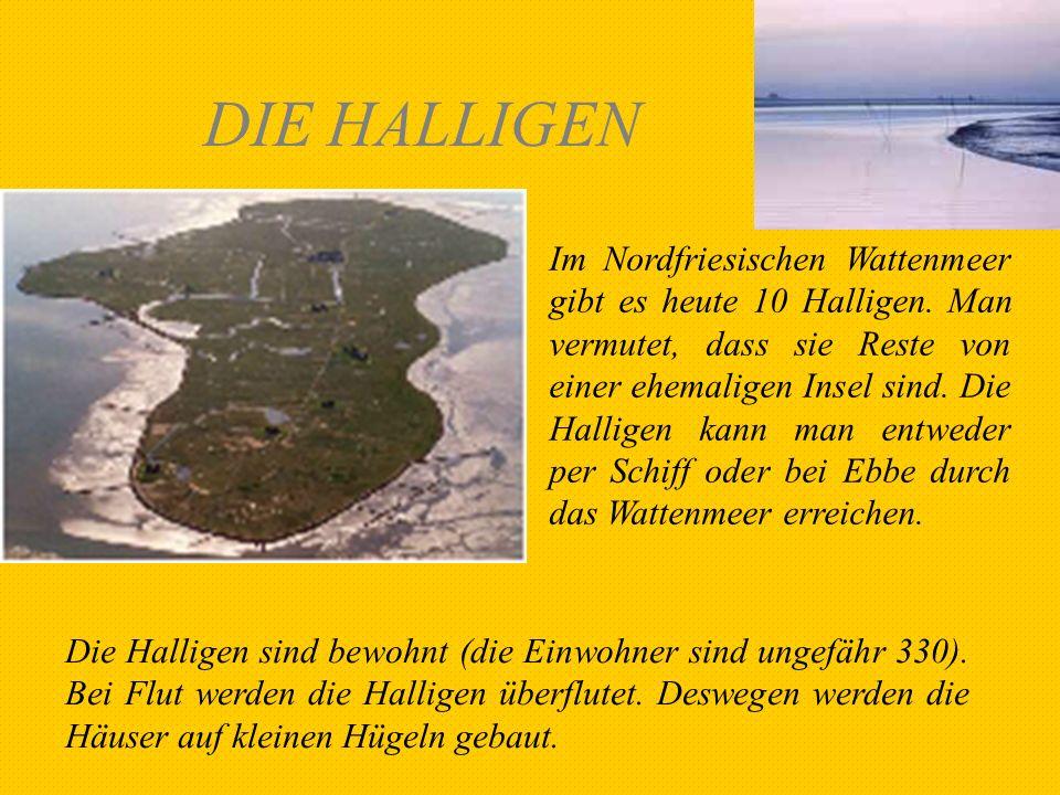 DIE HALLIGEN Im Nordfriesischen Wattenmeer gibt es heute 10 Halligen. Man vermutet, dass sie Reste von einer ehemaligen Insel sind. Die Halligen kann