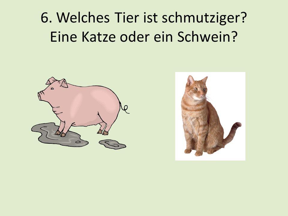 6. Welches Tier ist schmutziger? Eine Katze oder ein Schwein?