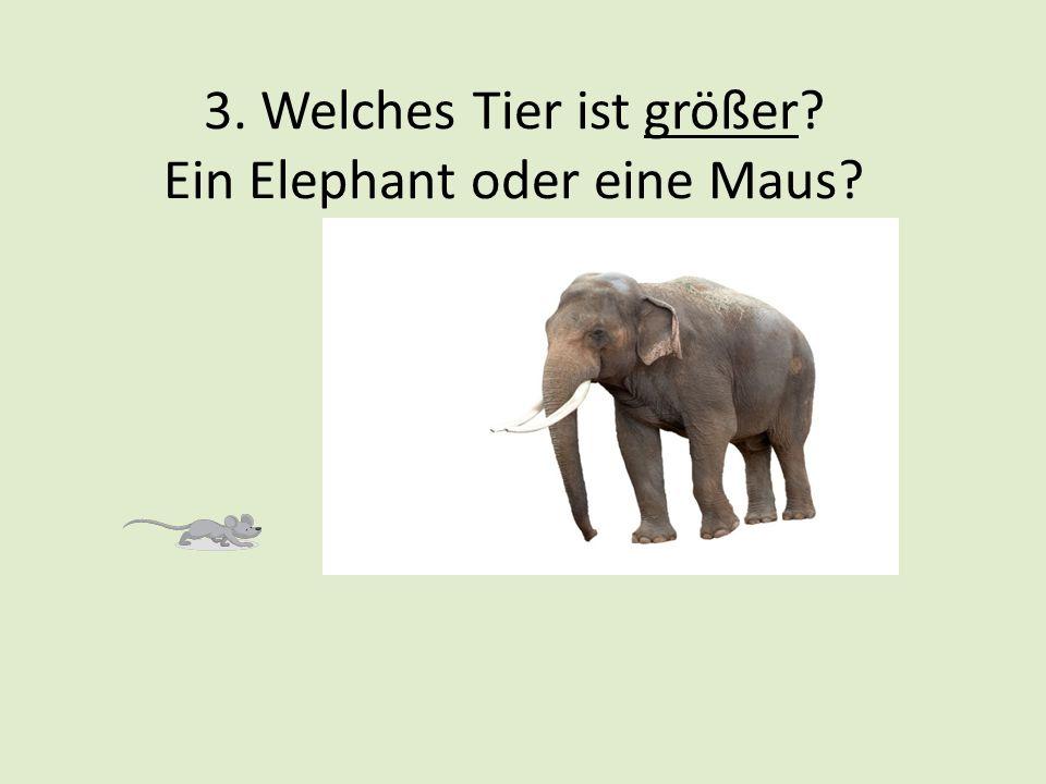 3. Welches Tier ist größer? Ein Elephant oder eine Maus?