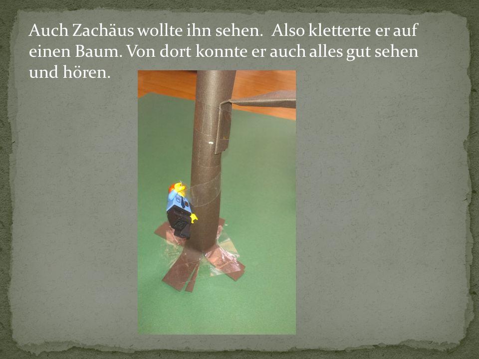 Auch Zachäus wollte ihn sehen. Also kletterte er auf einen Baum. Von dort konnte er auch alles gut sehen und hören.
