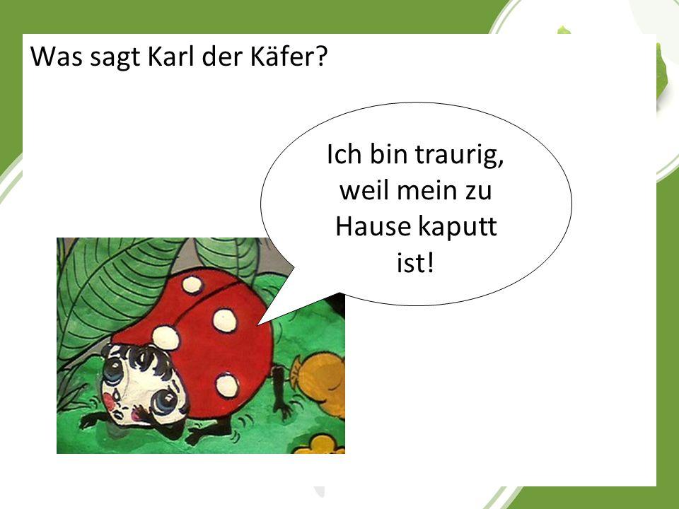 Was sagt Karl der Käfer? Ich bin traurig, weil mein zu Hause kaputt ist!
