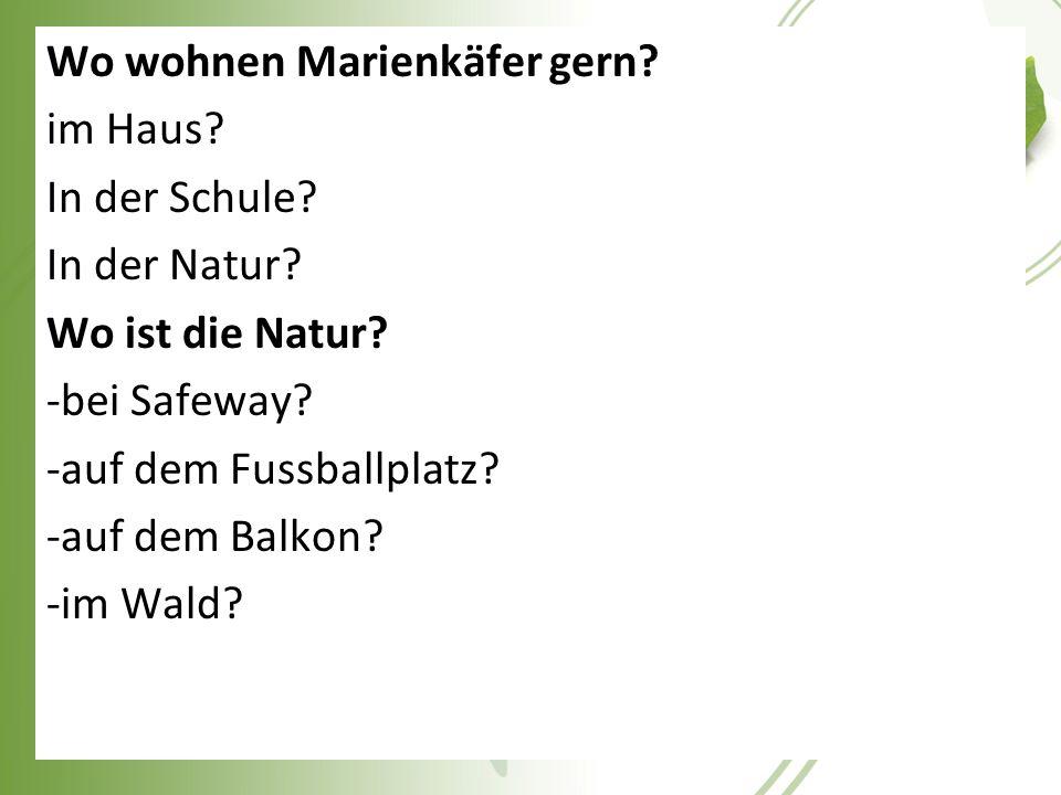 Wo wohnen Marienkäfer gern? im Haus? In der Schule? In der Natur? Wo ist die Natur? -bei Safeway? -auf dem Fussballplatz? -auf dem Balkon? -im Wald?