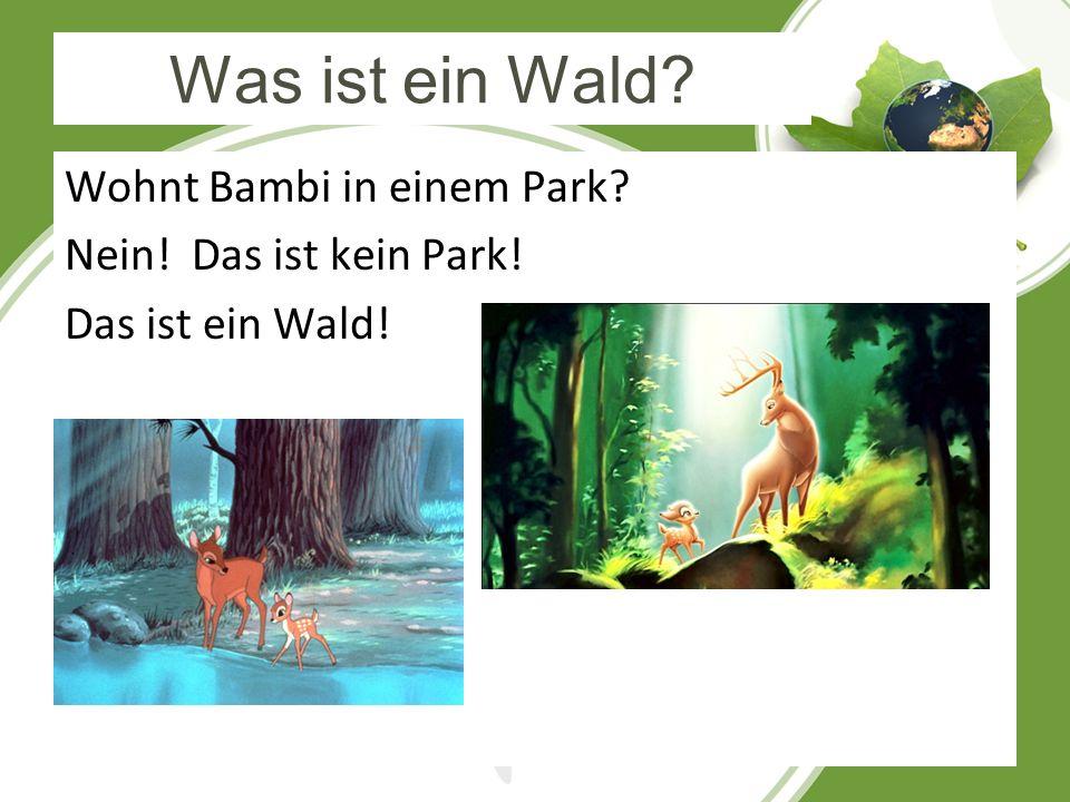 Was ist ein Wald? Wohnt Bambi in einem Park? Nein! Das ist kein Park! Das ist ein Wald!