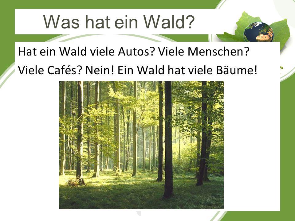 Was hat ein Wald? Hat ein Wald viele Autos? Viele Menschen? Viele Cafés? Nein! Ein Wald hat viele Bäume!