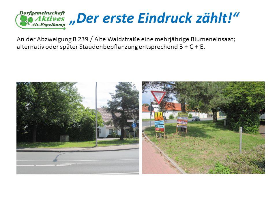 Der erste Eindruck zählt! An der Abzweigung B 239 / Alte Waldstraße eine mehrjährige Blumeneinsaat; alternativ oder später Staudenbepflanzung entsprec