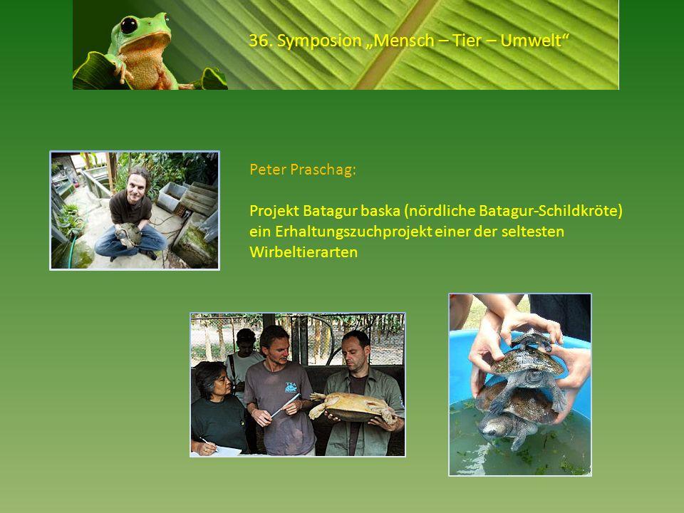36. Symposion Mensch – Tier – Umwelt Peter Praschag: Projekt Batagur baska (nördliche Batagur-Schildkröte) ein Erhaltungszuchprojekt einer der seltest