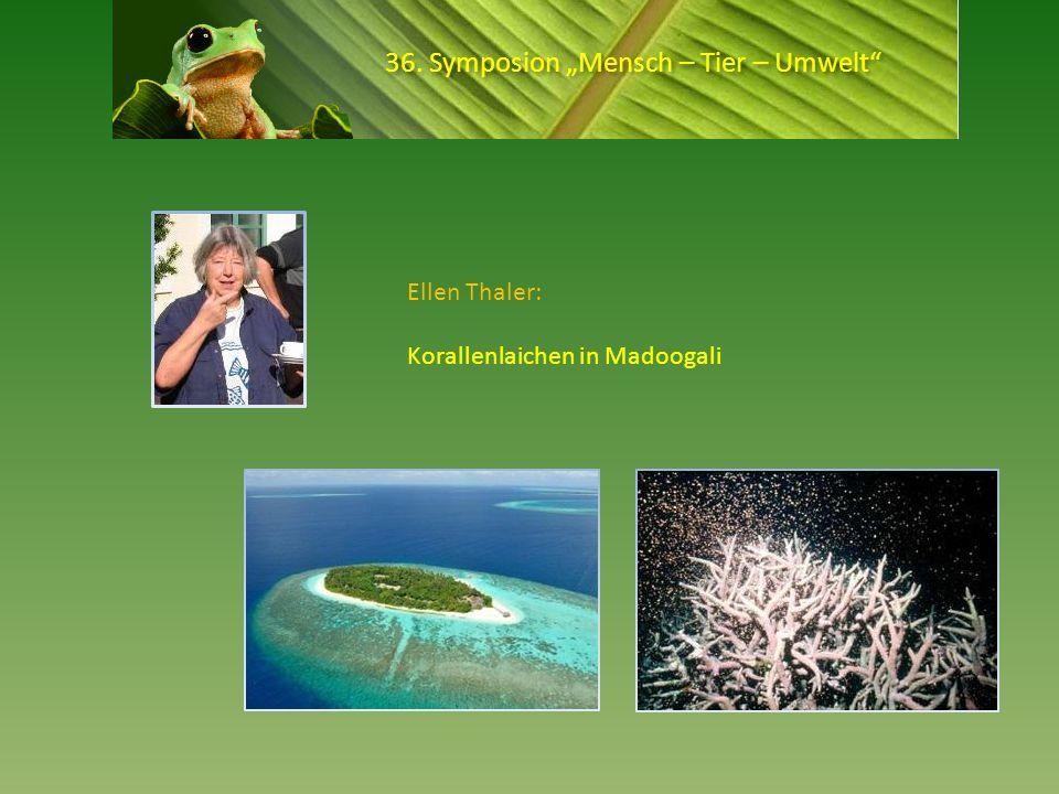 36. Symposion Mensch – Tier – Umwelt Ellen Thaler: Korallenlaichen in Madoogali