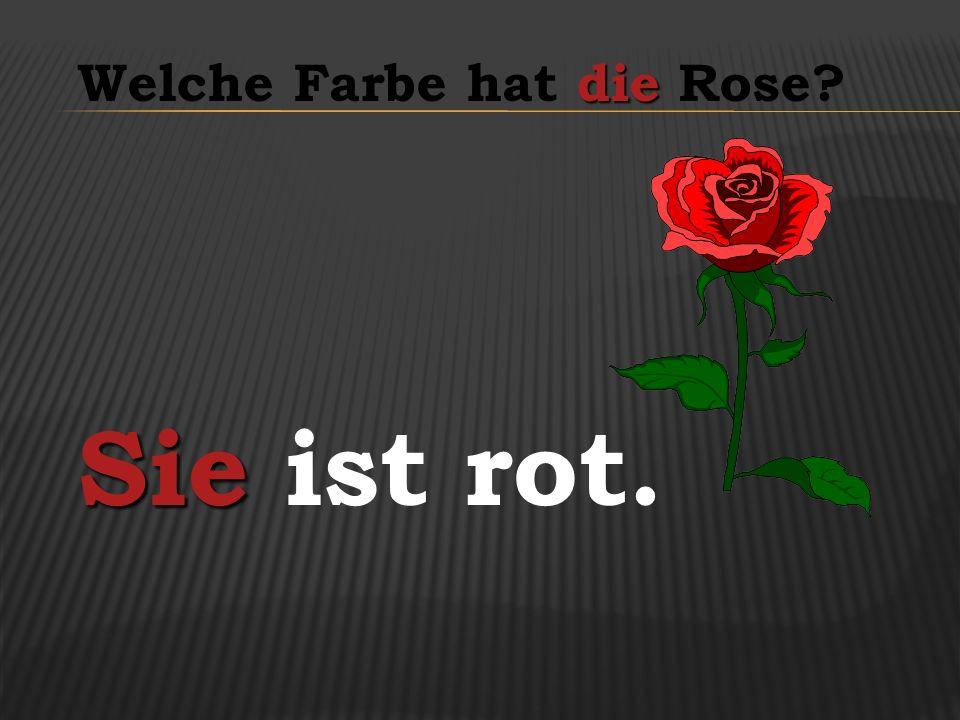 die Welche Farbe hat die Rose? Sie Sie ist rot.