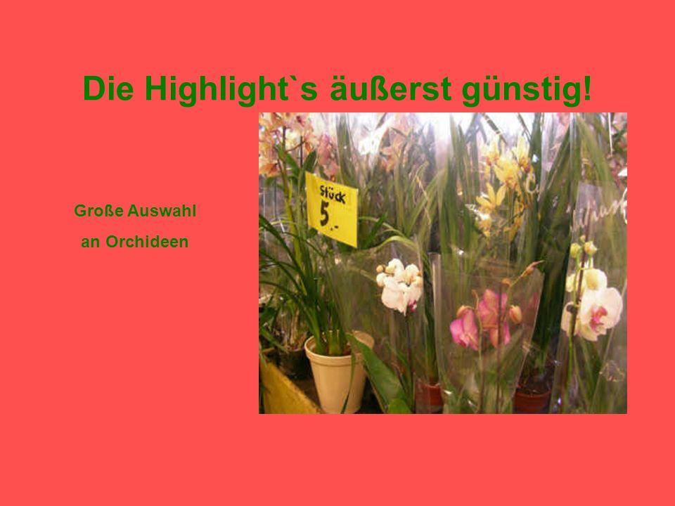 Die Highlight`s äußerst günstig! Orchideenstrauß- nur 4,00 der Strauß