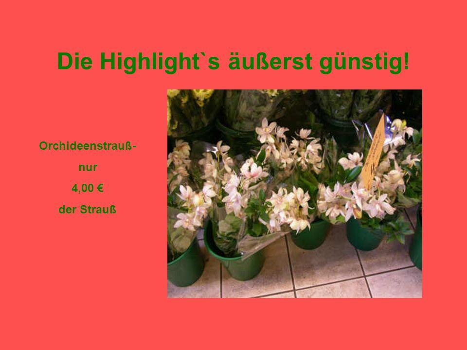 Die Highlight`s äußerst günstig! Ständig ein ganzes Haus voll frischer Blumen und günstiger Preise!